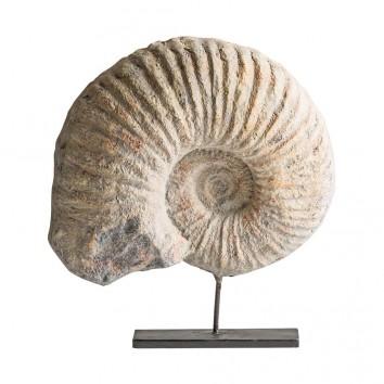Figura fosil de caracola - 34x10x37h